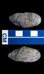 clam 1.jpg