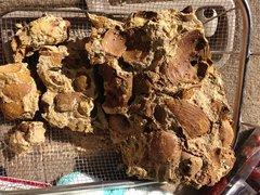 Mollusk Molds