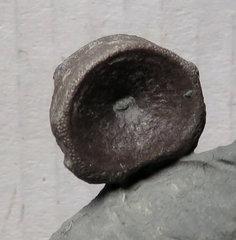Ichthyosaur vertebra