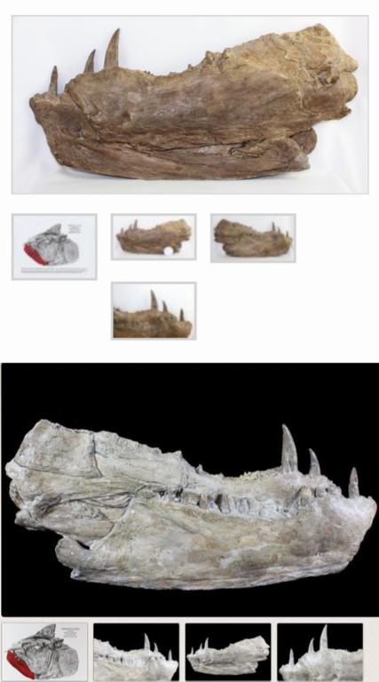 5bdf5dad46c67_IdenticalFossils.thumb.png.fddbf0483bafc8a68ff9baf51f8fad28.png