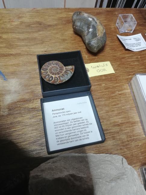 Ammonite.jpg.ff14b2c7a916029b665b2e99c2dfbebf.jpg