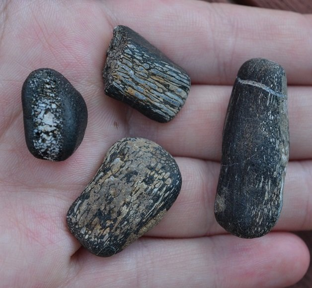 Rolled Dinosaur Bones (found 2015)