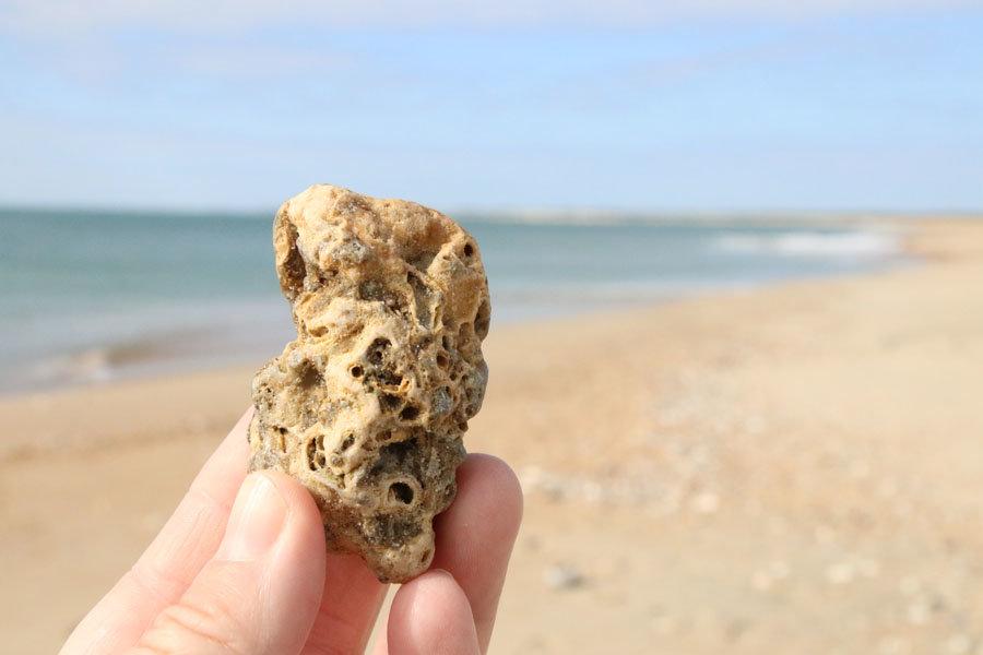 Pleistocene Worm Tubes, Cape Hatteras