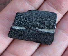 Ichthyosaur Jaw Fragment (found 2014)