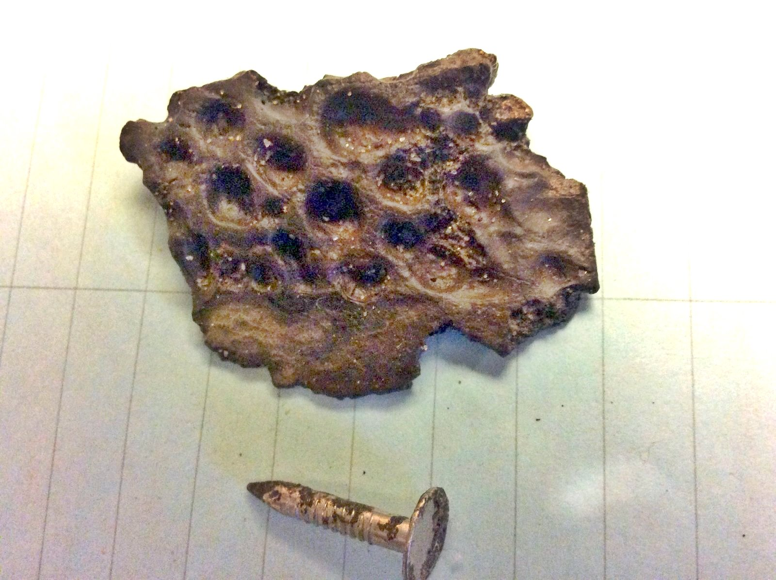 Upper Cretaceous Crocodile Scute from Big Brook, New Jersey