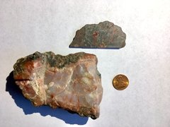 Dinosaur coprolites