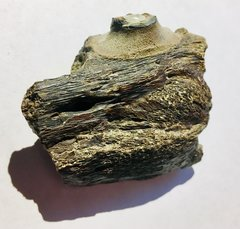 Mosasaur jawbone