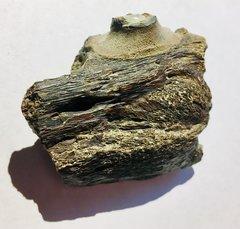 NSR Mosasaur jawbone