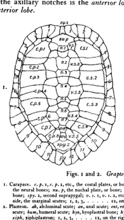 turtle shell pattern.jpg