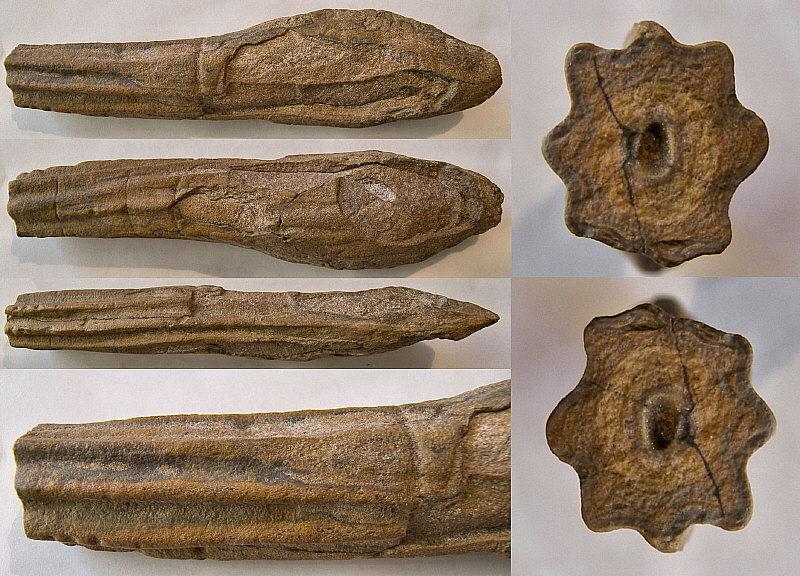 Stromatoporoid_1B.JPG.40106b90219eb101136ca70e401ba030.JPG