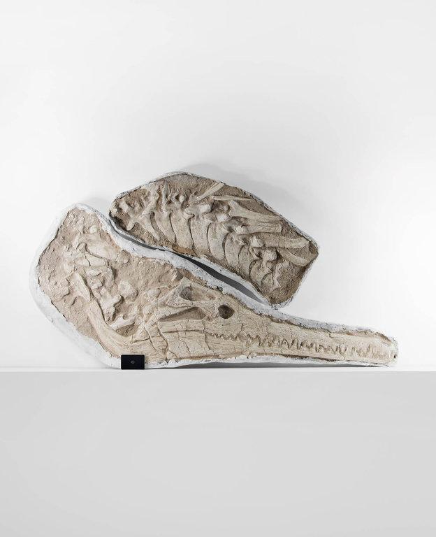 crocodile-vertabrae-fossil-for-sale-1.thumb.jpg.c1b5bd264705e20382987db9a35c158b.jpg