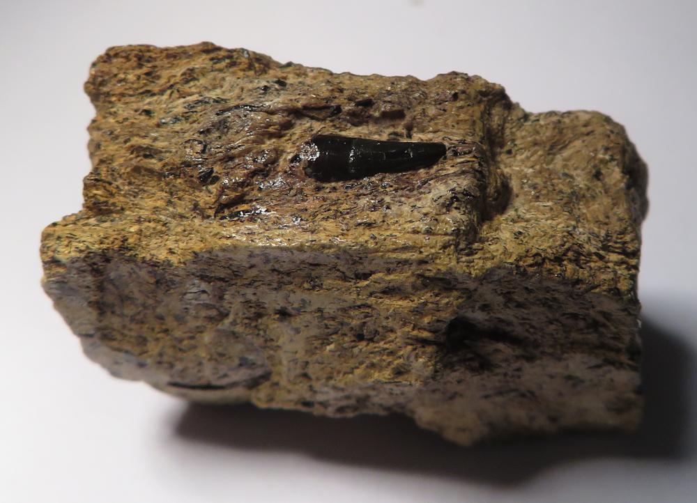 ichthyosaurus.JPG.d21eeb2a0207f7a1dff4ef4f5ee20a98.JPG