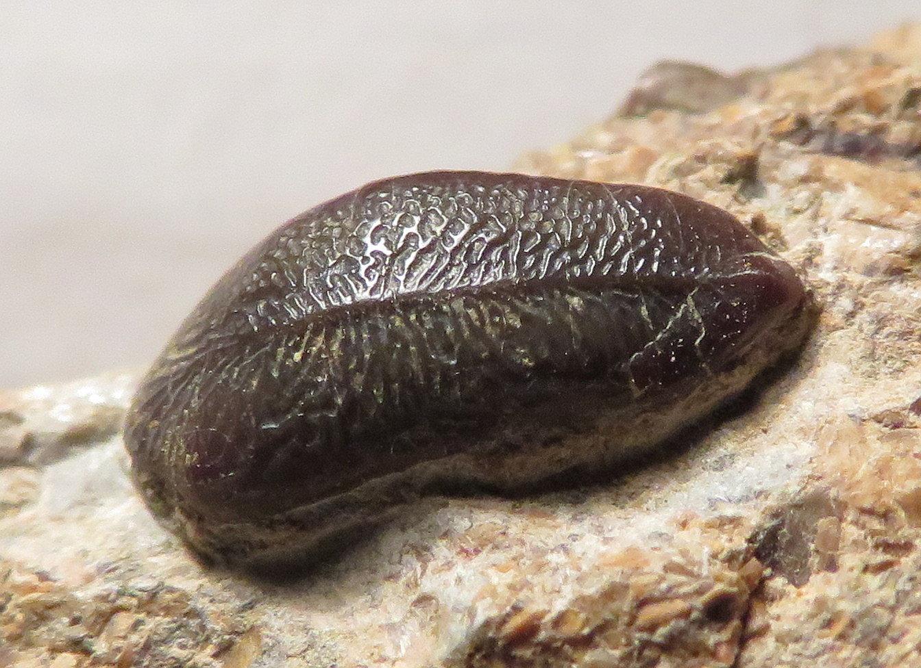 Triassic vertebrate fossils