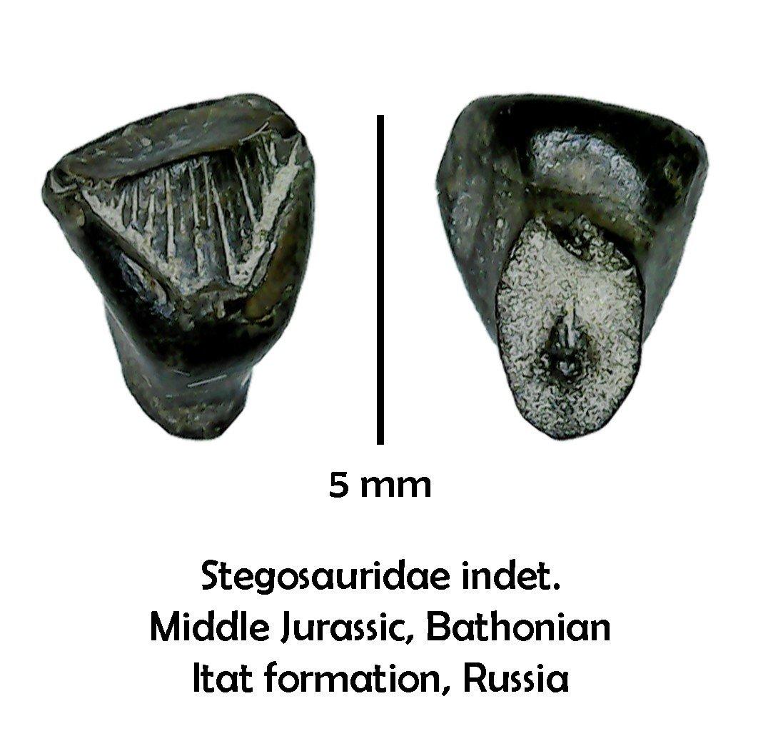 Russian Stegosaur