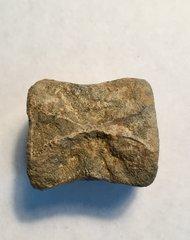 Thescelosaurus Vertebra (pt.2)