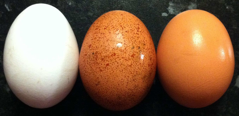 5c5f439ddd6c5_Egg_colours-Copy.thumb.jpg.952a9732f658ff84d25dfb1c03f76659.jpg