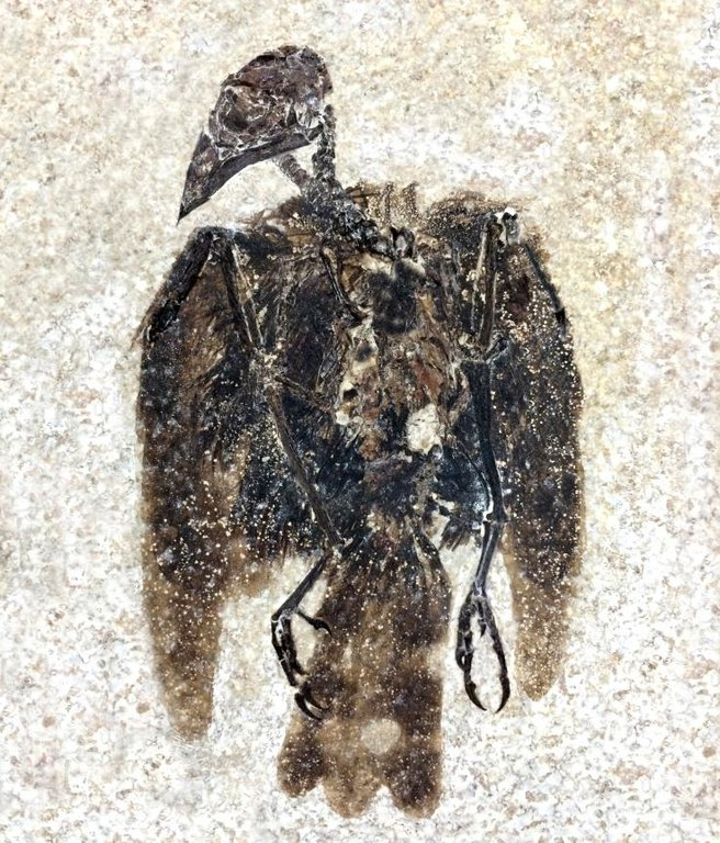 fossilized-bird.jpg