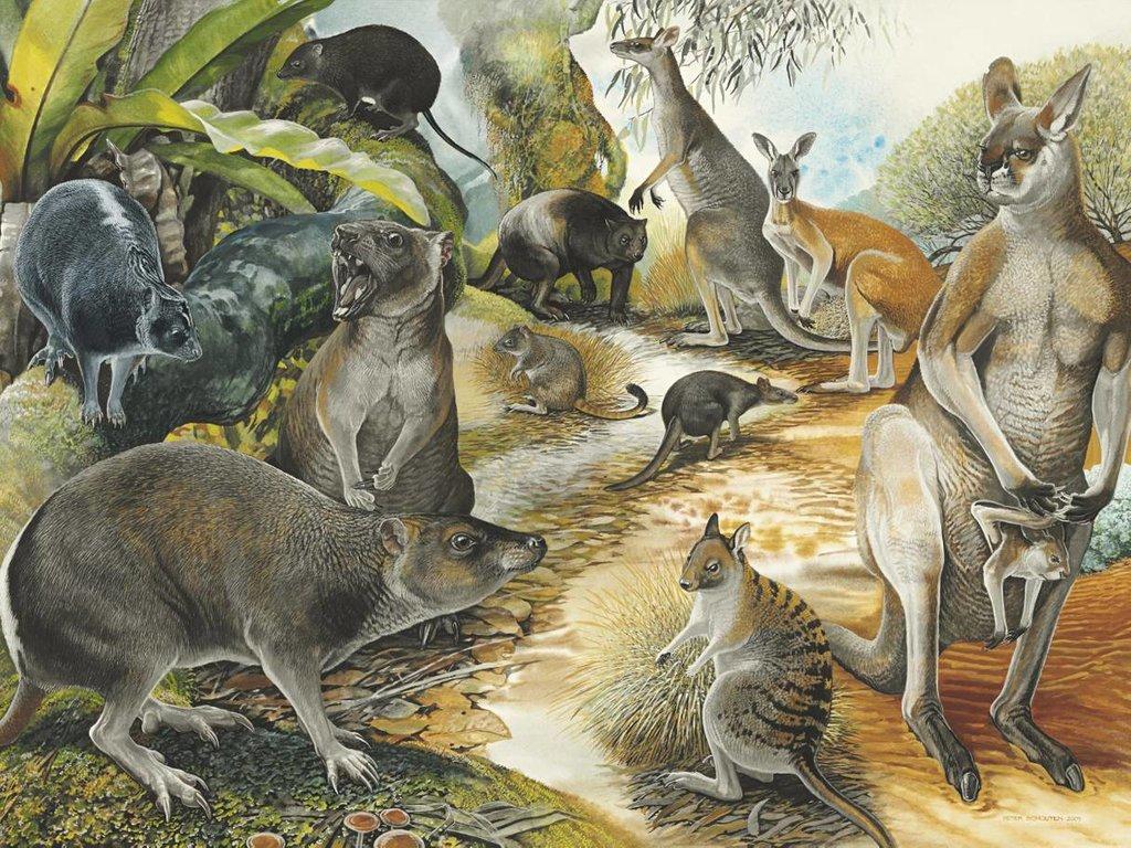 kangaro-ancient.jpg