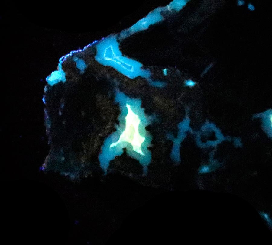 Blue Forest Fluorescent Petrified Wood