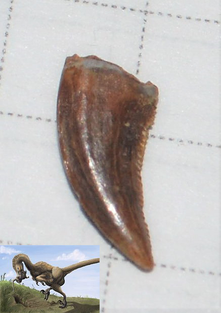 saurornitholestes.jpg.06ee11efbd75ce6d475b7b253b242301.jpg