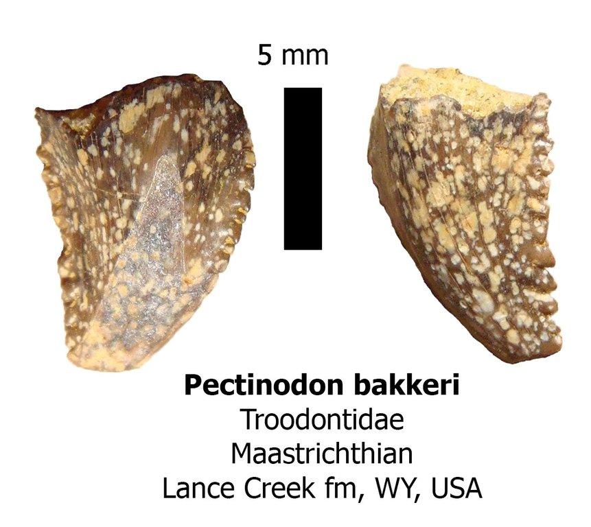 troodon.thumb.jpg.e88e5cec2bf083bcfc026f79cd8ba1f5.jpg