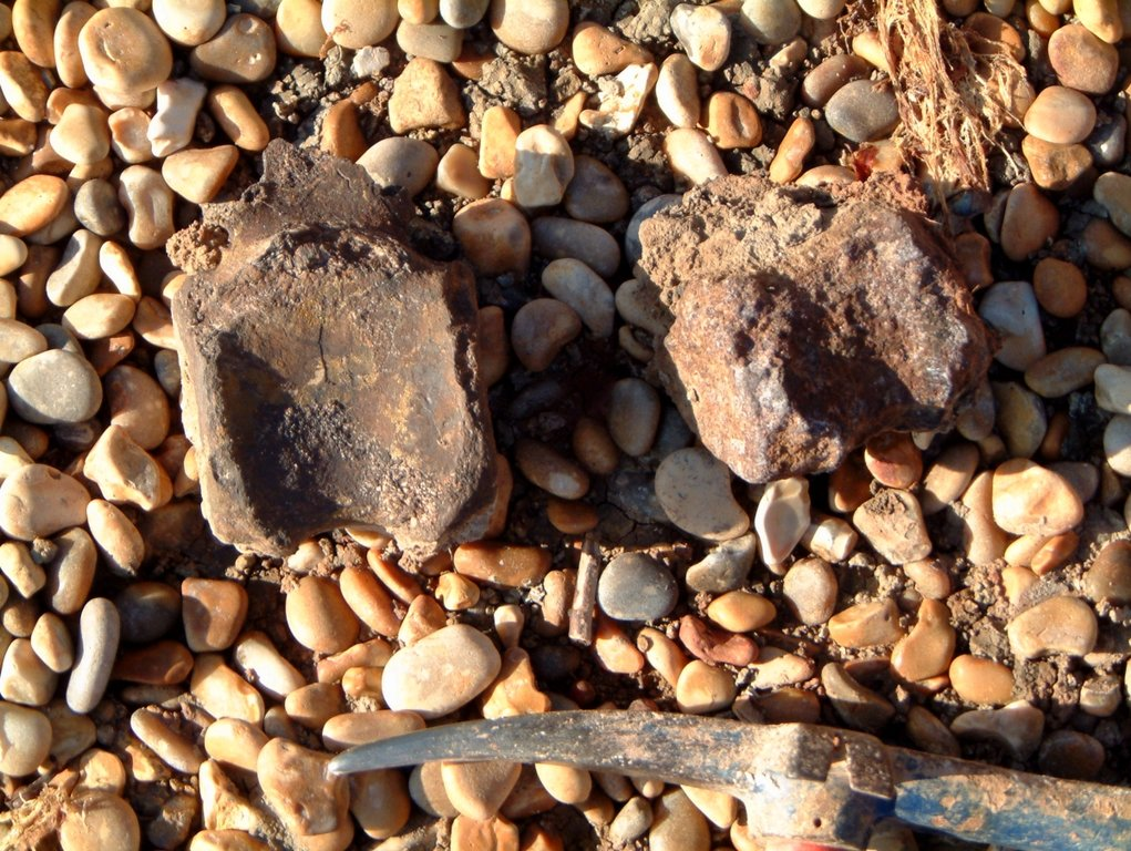 Iggy caudals on beachC.JPG