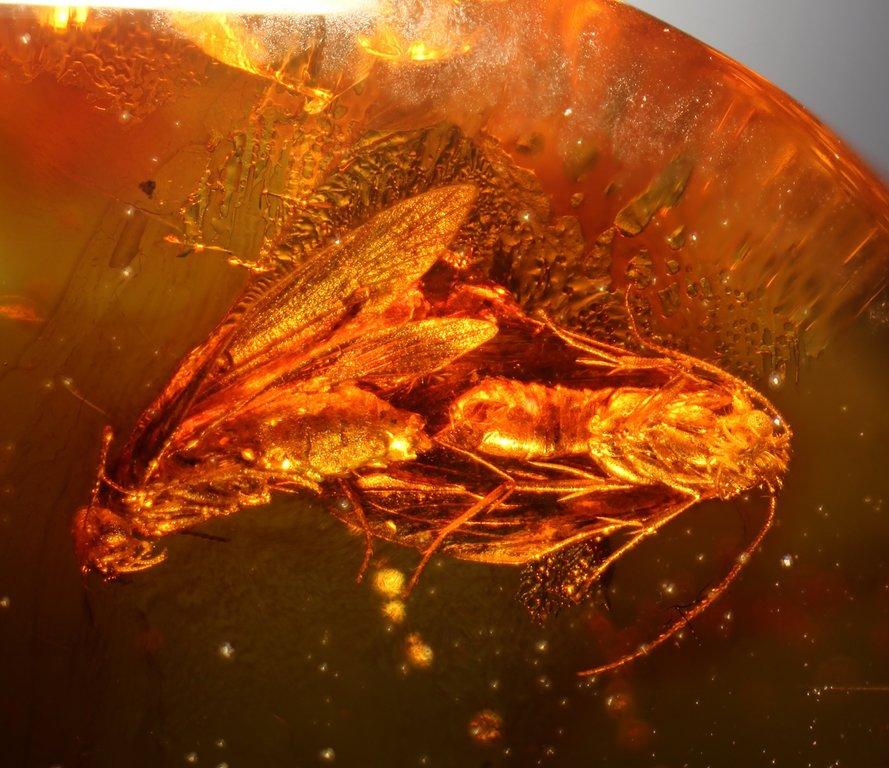 2244 mating moths possibly.jpg
