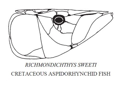 Richmondichthys Sweeti.JPG