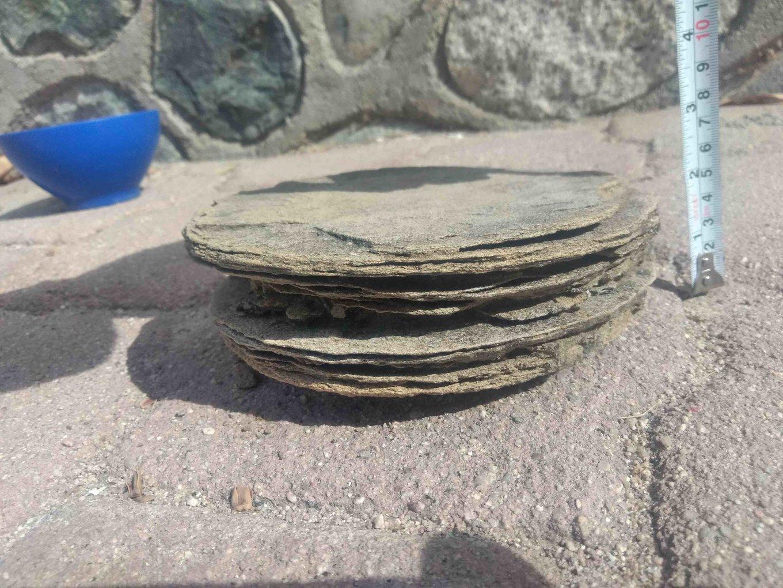 Tortilla disc.jpg