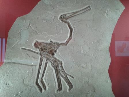 New pterosaur species.jpg