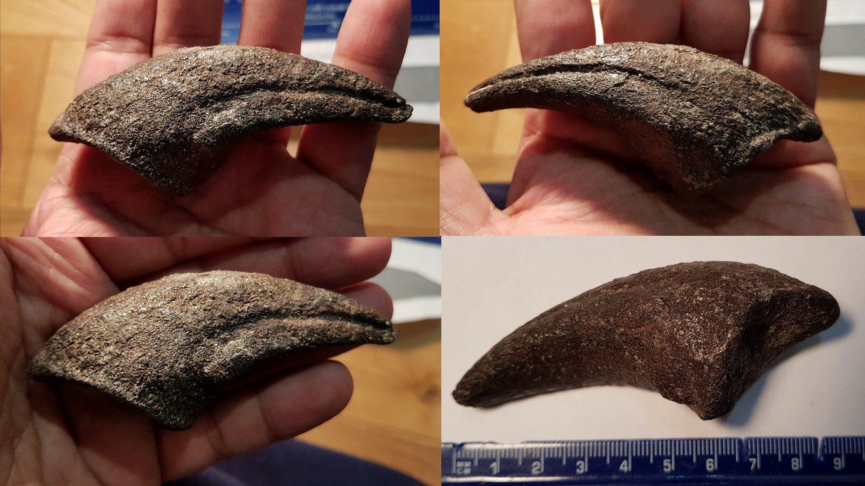 Allosaurus claw 4 resize.jpg