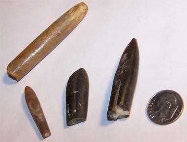 Belemnite_Fossils.jpg