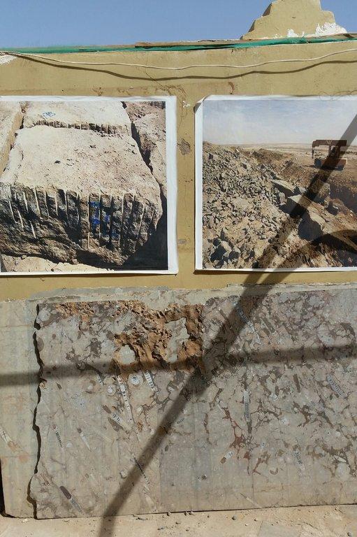 Fossil4.thumb.jpg.3a85950f4c02d857bae6089be665cea0.jpg