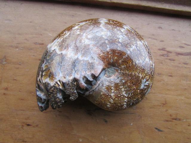 Fossil Hamburg
