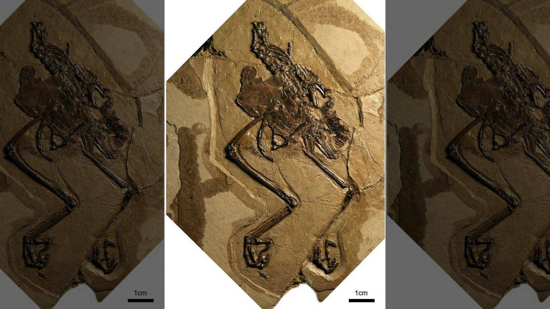 bird-fossil-1.jpg