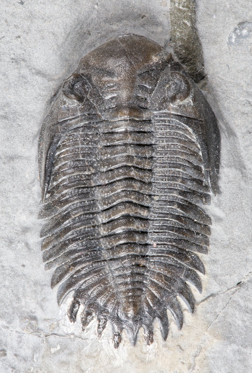 dorsal-small.jpg