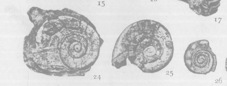 gastropod.jpg