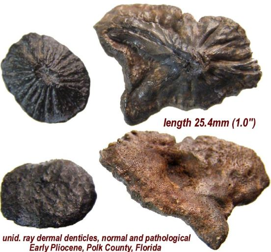 fossil example 2.JPG
