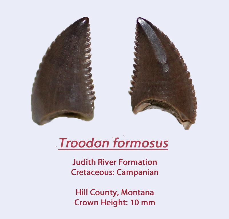 TroodonF2.thumb.jpg.6426db0d434e7feee8ec06dc20e400d9.jpg