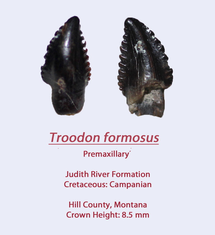 TroodonF4.thumb.jpg.d599cb4e84cd29facae7ab26f7b27a28.jpg