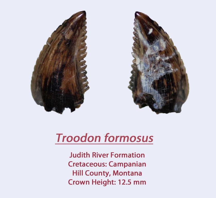 TroodonF5.thumb.jpg.13d906b0623e3ca48d2125b3ea46972f.jpg