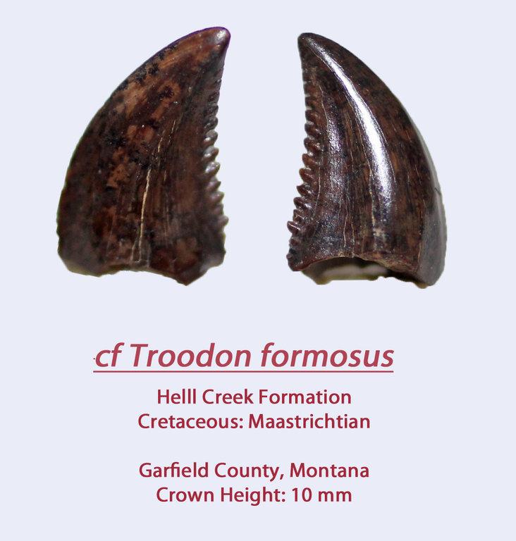 TroodonHC3.thumb.jpg.2e151c05575613c9c3ead1b77f43f3e0.jpg