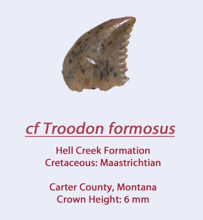 TroodonHC8.thumb.jpg.d5977f82563e40866fc32a3c05248840.jpg