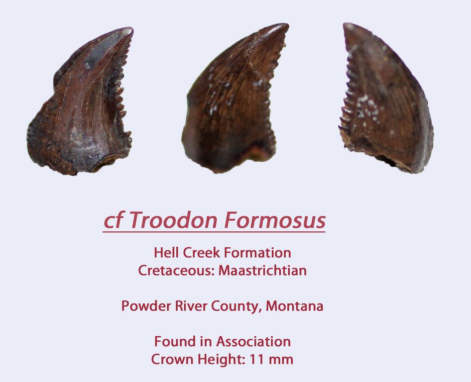 TroodonHC9.thumb.jpg.e0e6cd3548102fa78222e25d8cf696a7.jpg