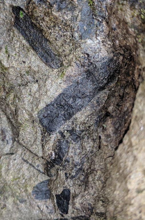 charcoal2.jpg