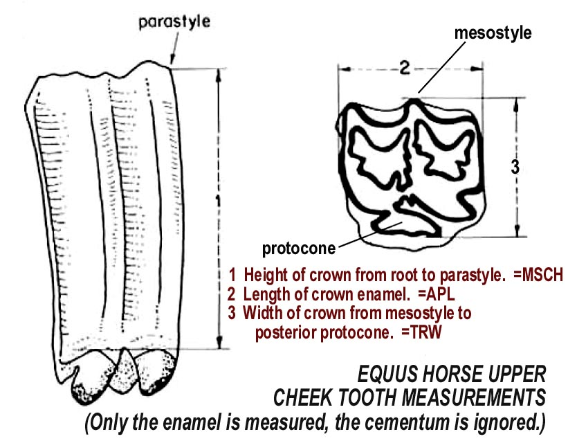 horse_upper_measurements.JPG