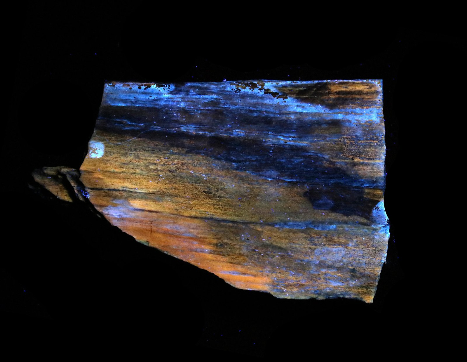 Petrified Wood Under UV