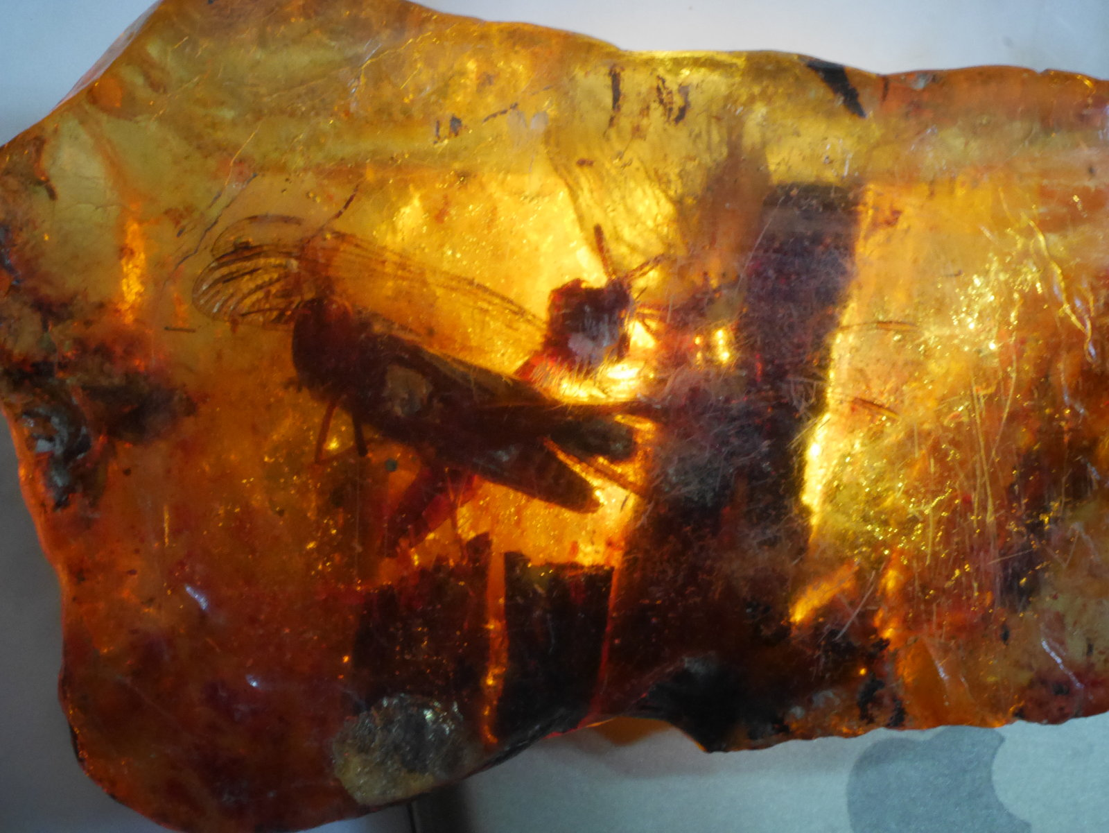fossil amber