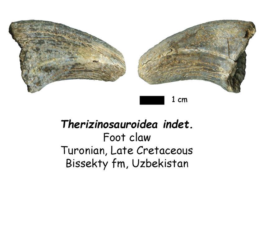 therizinosaur.thumb.jpg.e054ae0eaf46467204d666fe572a07fa.jpg