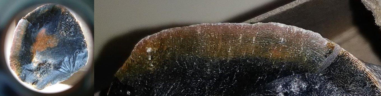 5ce17c77040d0_dugongbonesection.thumb.jpg.c85ca89c0d299ec8c79ea9081fb57995.jpg